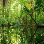 daintree-wilderness-lodge-australia-1