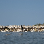 Djoudj National Park Senegal Region de Saint-Louis Afrika Africa